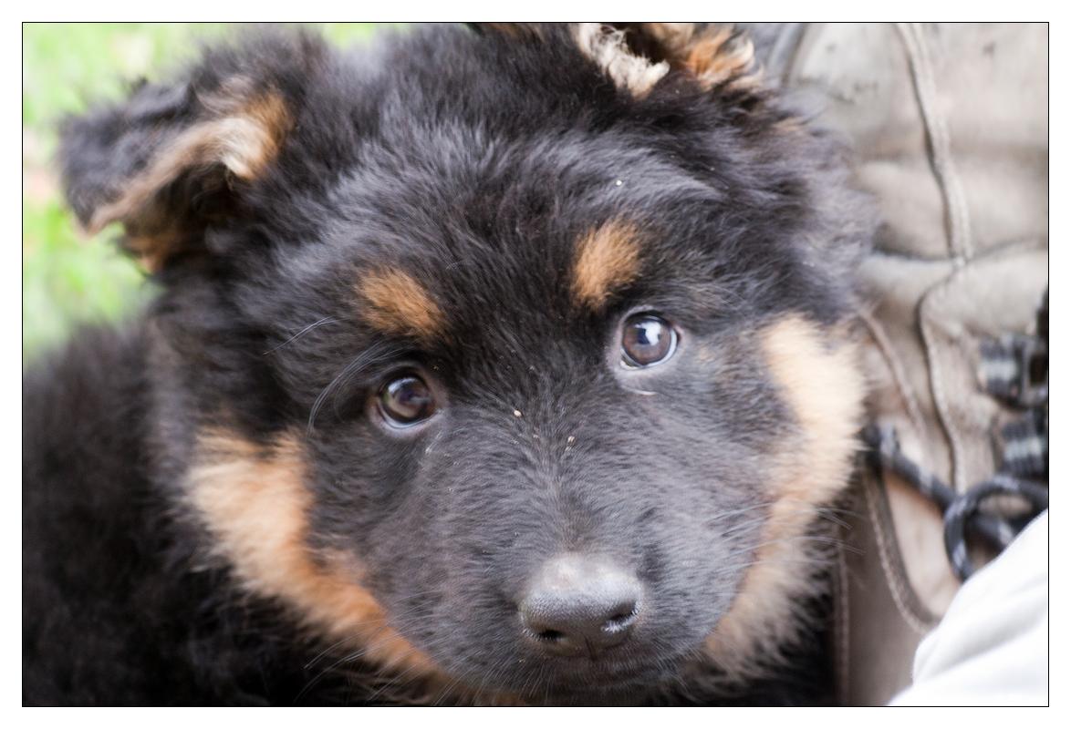 Rok psího života