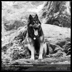 Chodský pes - Hektor z Letinské kovárny